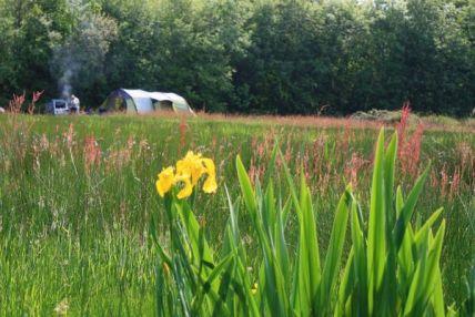 the-meadows-south-west-england-cornwall-medium-1