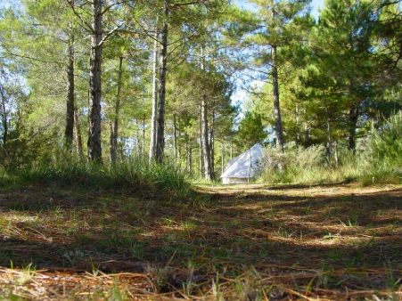 forest-days-catalonia-lleida-large-1
