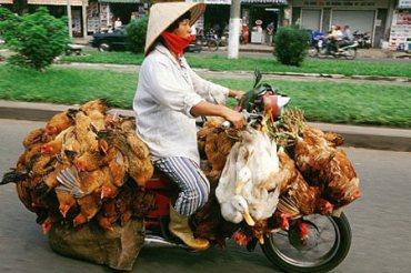 nf_110726_chicken-bike