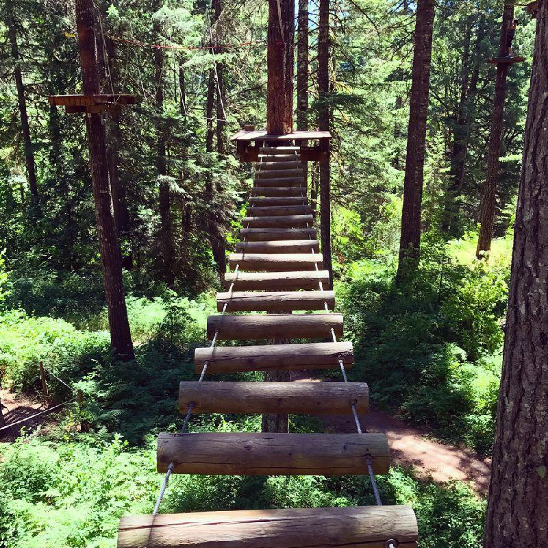 17710556_treetop-trekking-adventure-in-oregon_t6847a1ff