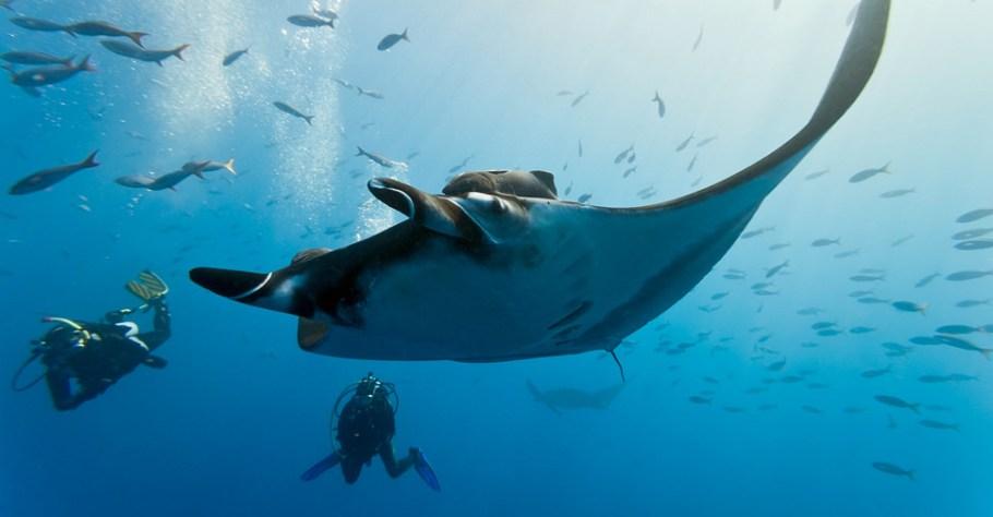 duiken-met-reuze-mantas-mozambique