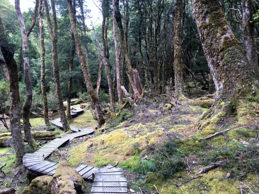 hiking+tasmania+cradle+mountain