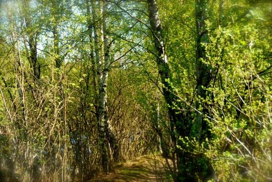 DSC_0106 Bingedammen, Fredrikstad, Norway Hanne Siebers