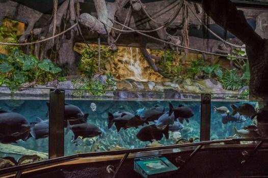 amazonas_aquarium