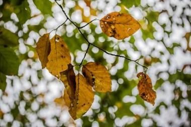 autumn-branch