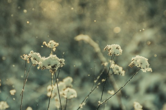graceful_winter_2