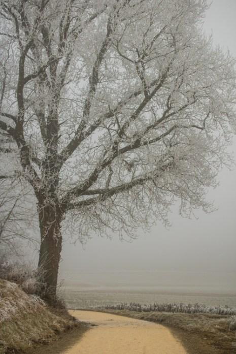 the-road-taken_winter-surprise_1