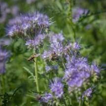 focus_bee on plant_2