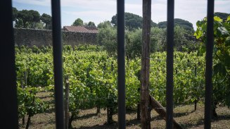 An ancient winery where they still produce traditional wines.
