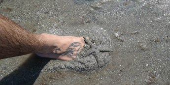 Scorpion tattoo reveals starfish from beneath the sand
