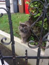 A beautiful, friendly grey cat that drew a lot of attention from us. When the owner let it back inside she gave us a weird look.