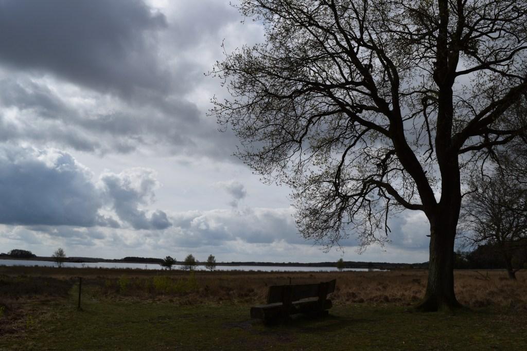 Weekend at Dwingeloo National Park - togetherintransit.nl