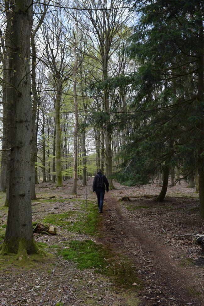 Weekend at Dwingelderveld National Park - walking through the forest area - togetherintransit.nl