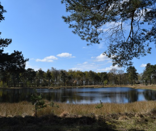 Dwingelderveld National Park