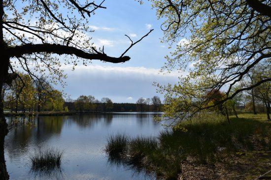 Weekend at Dwingelderveld National Park views across a lake