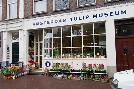 Tulips In The Netherlands - Amsterdam Tulip Museum close to the Anne Frank House.