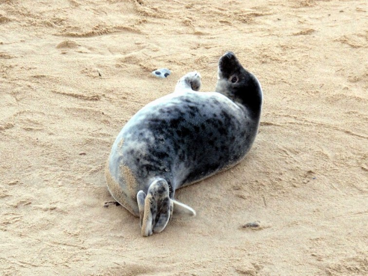 Winterton-on-Sea seals, Norfolk coast - Winterton On Sea togetherintransit.nl