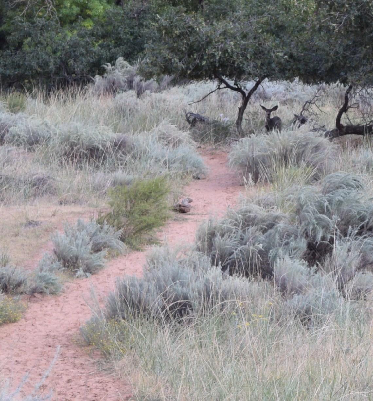 Zion National Park Hiking Angels Landing togetherintransit.nl 18