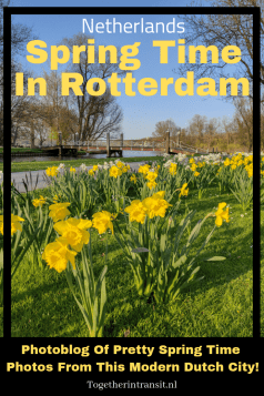 Spring in Rotterdam, The Netherlands is such a pretty season to visit. These Spring Time Photography shots are taken all around the modern city. #Rotterdam #travel #spring