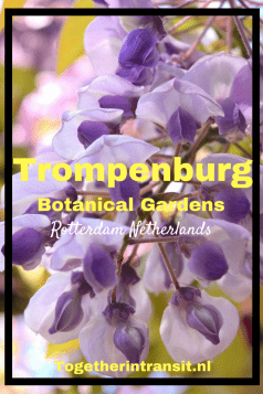 Visit the beautiful Botanical Gardens Trompenburg in Rotterdam.