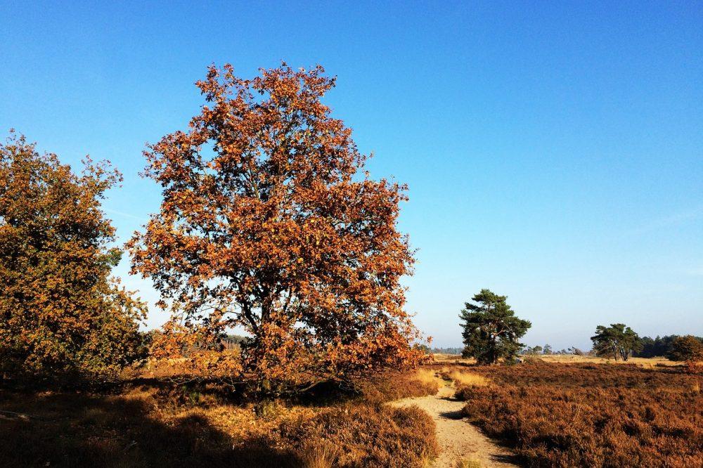 National Parks of the Netherlands - Loonse en Drunense Duinen National Park
