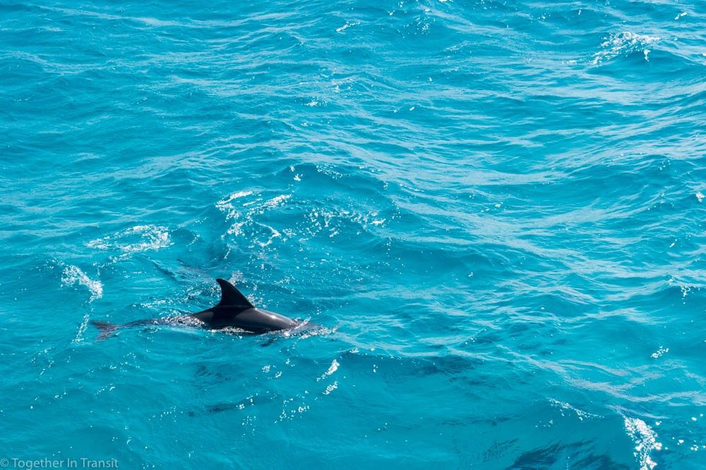 Dolphins on our snorkeling day trip in Hurghada, Egypt