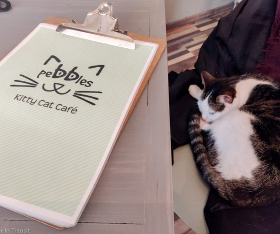 Cat sleeping on my coat at the Cat Cafe