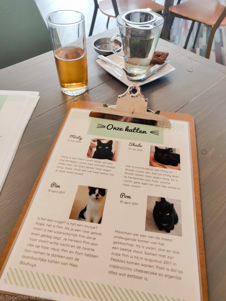 Cat profiles to learn about them before you meet them.