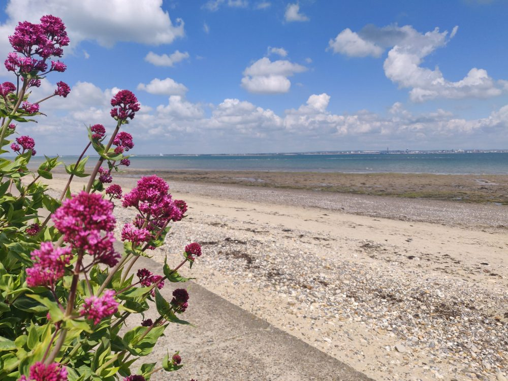 Ryde beach isle of wight with flowers