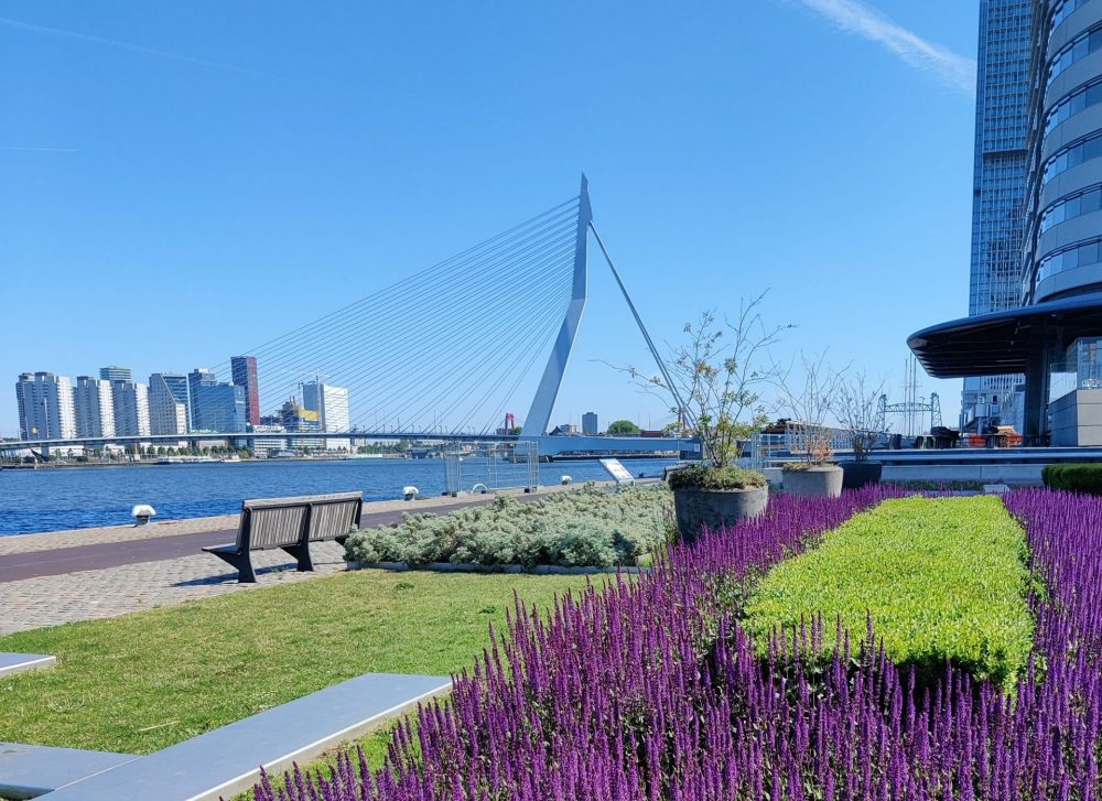 Erasmusbrug Rotterdam with spring flowers