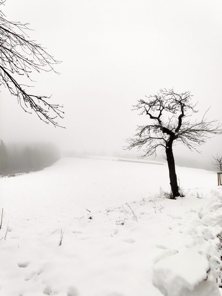 A tree next to a field of snow in Luxembourg