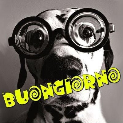 buongiorno cane simpatico immagini nuove gratis whatsapp facebook