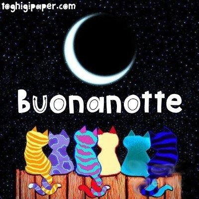 Buongiorno Buonanotte Gatti Toghigi Paper