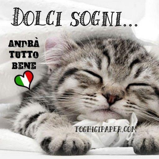 buonanotte gattino andrà tutto bene immagini gratis WhatsApp nuove bacionotte dolci sogni