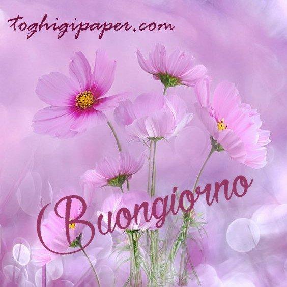 Primavera fiori buongiorno nuove immagini gratis per WhatsApp, Facebook, Instagram, Pinterest