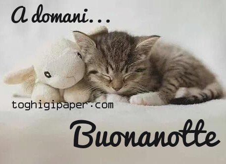 Gatti buonanotte a domani immagini gratis WhatsApp nuove bacionotte dolci sogni per WhatsApp, Facebook, Pinterest, Instagram, Twitter