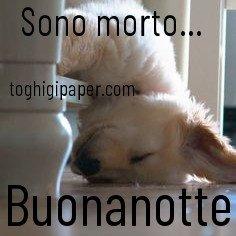 Buonanotte cagnolino immagini gratis WhatsApp nuove bacionotte dolci sogni per WhatsApp, Facebook, Pinterest, Instagram, Twitter