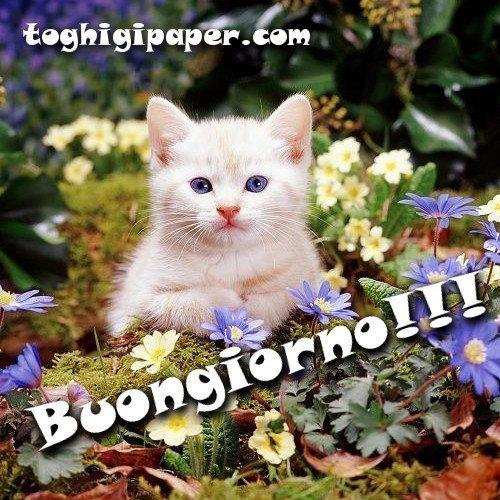 Buongiorno gatti immagini nuove gratis WhatsApp Facebook Instagram Pinterest Twitter