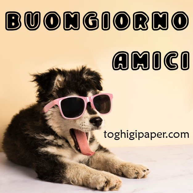 Buongiorno amici cane immagini nuove gratis WhatsApp Facebook Instagram Pinterest Twitter