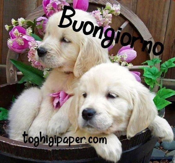 Buongiorno cani, immagini nuove e belle da scaricare gratis e condividere con i tuoi amici su WhatsApp, Facebook, Instagram, Pinterest, Twitter