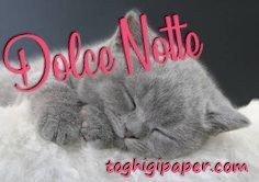Buonanotte gatti immagini gratis WhatsApp nuove bacionotte dolci sogni per WhatsApp, Facebook, Pinterest, Instagram, Twitter