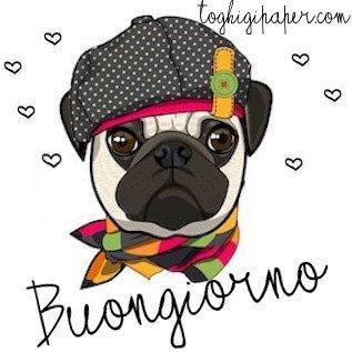 Buongiorno cane immagini nuove gratis whatsapp facebook Instagram Pinterest
