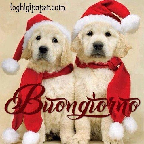 Buongiorno Natale immagini nuove gratis whatsapp Facebook Instagram Pinterest