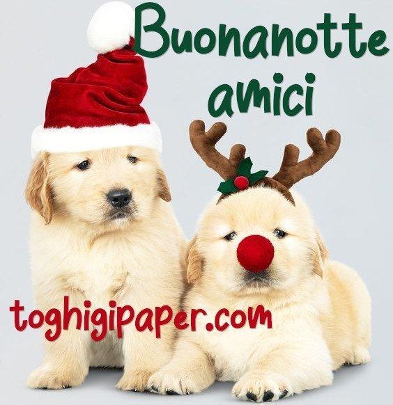 buonanotte cani natalizia immagini gratis WhatsApp nuove bacionotte dolci sogni