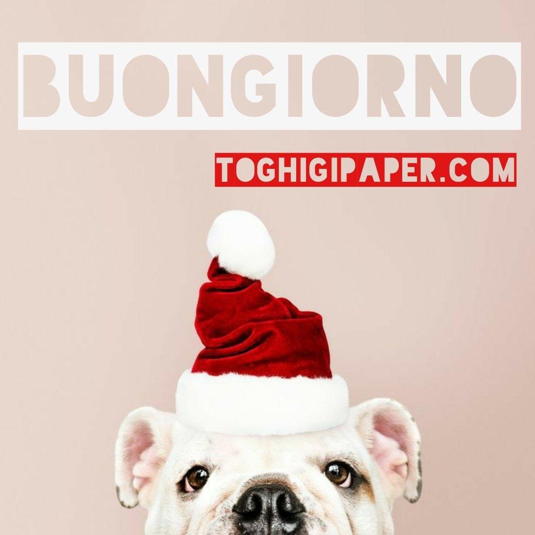 Buongiorno cani immagini nuove gratis whatsapp facebook Instagram Pinterest