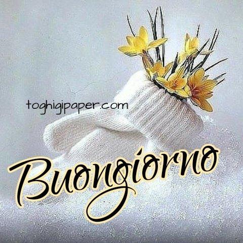 Inverno buongiorno fiori, immagini nuove e belle da scaricare gratis e condividere con i tuoi amici su WhatsApp, Facebook, Instagram, Pinterest, Twitter