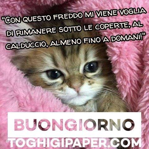 Gatti buongiorno immagini nuove gratis WhatsApp Facebook, Instagram, Pinterest, Twitter