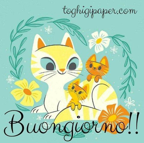 Gatti buongiorno, immagini nuove e belle da scaricare gratis e condividere con i tuoi amici su WhatsApp, Facebook, Instagram, Pinterest, Twitter