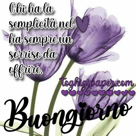 Fiori primavera buongiorno nuove immagini gratis WhatsApp, Facebook, Instagram, Pinterest, Twitter