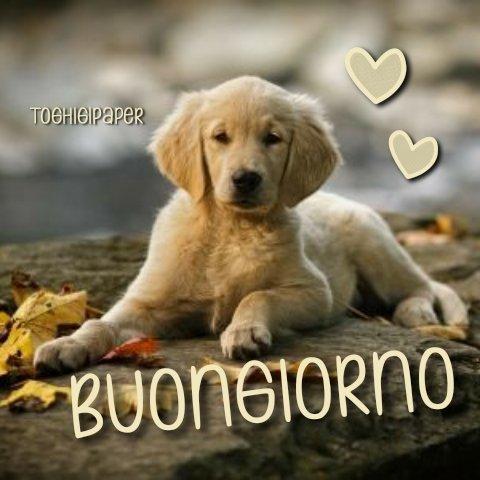 Autunno buongiorno cagnolino, immagini nuove e belle da scaricare gratis e condividere con i tuoi amici su WhatsApp, Facebook, Instagram, Pinterest, Twitter